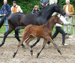 Filly by Perechlest out of Vicenza by Showmaster