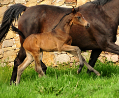 Our foals from the year 2019