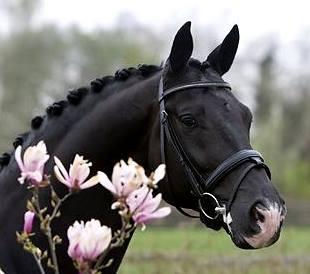 pferde vater aus ganschow
