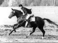 Enrico Caruso at stallion performance test