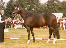Enrico Caruso - Premium sire of the 1st National Sire Show