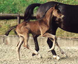 Filly by Exclusiv x Kostolany