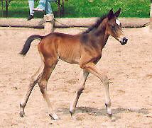 Colt by Summertime out of Premium-Mare Pour moi by Trocadero
