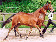 Filly by Freudenfest out of Premium-Mare Kalmar by Exclusiv