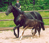 Filly by Kostolany out of Ravenna by Guy Laroche