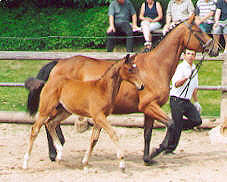 Filly by Kostolany - Tycoon - Don