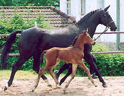 Filly von Exclusiv out of Premium-Mare Violetta by Kostolany