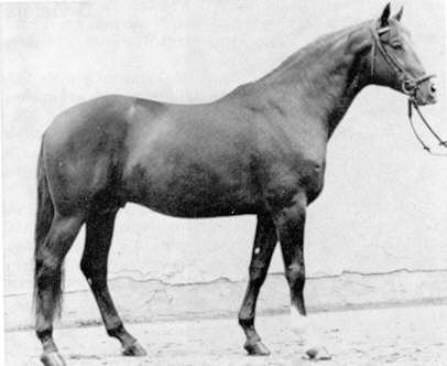 blue horses matine
