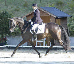 3-year old premium-mare Hannah by Freudenfest - Exlusiv