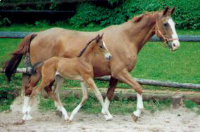 Kleopatra (22-years old) with filly by Kostolany