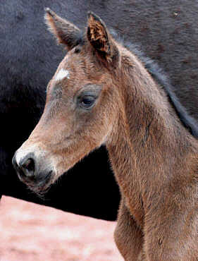 12 hours old: colt by Summertime - Exclusiv