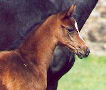 Filly by Summertime - Exclusiv