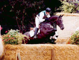 finalist at teh Bundeschampionate for young German bred eventhorses 